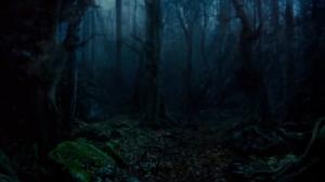 Forest-EMCastellan