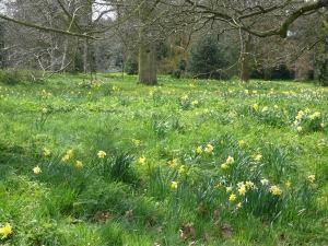 EM Castellan - Kew Gardens - Daffodils